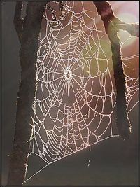 Spiderwebempty
