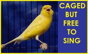 CanarySinging