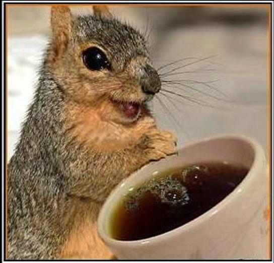 CoffeeSquirrel