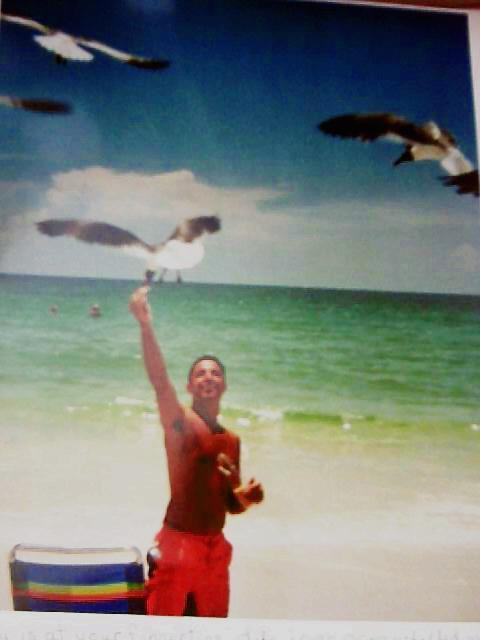 Chadseagulls