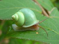 SnailGreen