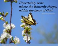 Uncertainty, butterfly, hariette petersen