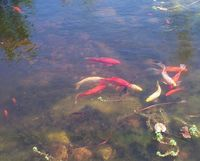 FishinPond