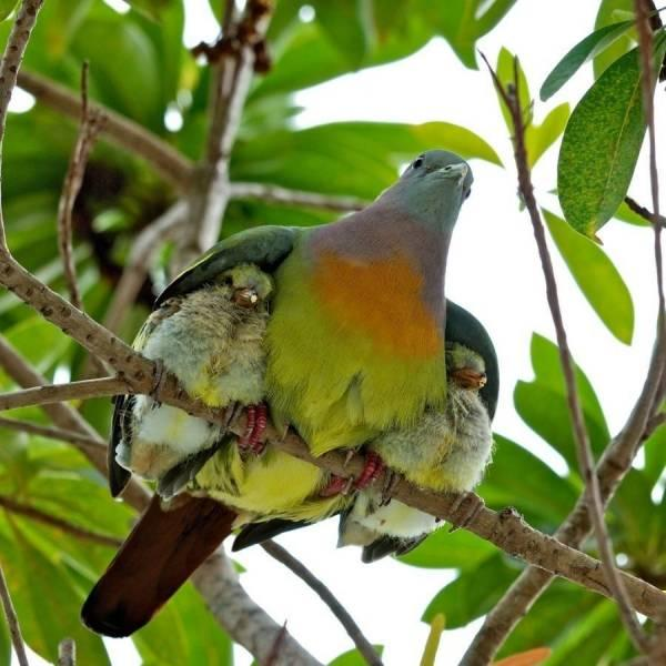 Shelter Under Wings