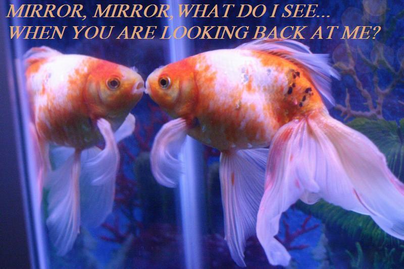 MirrorFISH