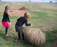 Tumbleweed girls