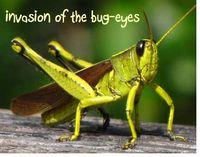 Grasshopper invasion
