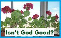 Gods Geraniums