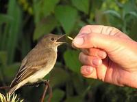 Birdeatingfromhand