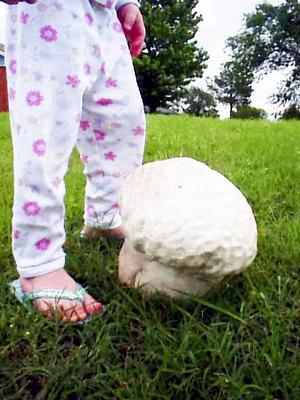 Mushroomfeet