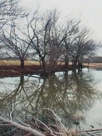 Treereflection