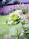 Flowersunflwrunfoldinghead