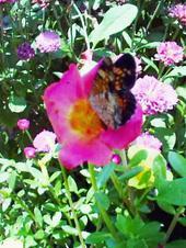 Butterflyrewardbest