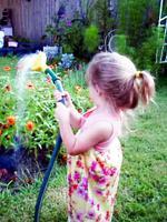 Hayjsprayingflowers