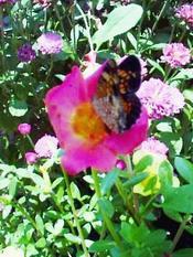 Butterflyrewardbest_2