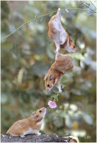 Hamsterhelpers