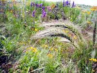 Meadowtallgrass1