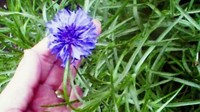 Flowerpurplehand1