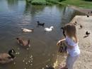 Duckfeedinghayjae